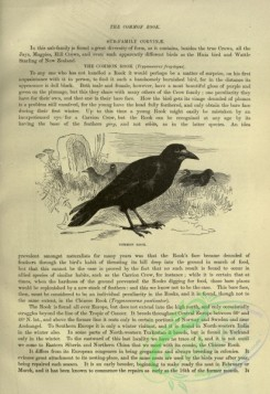 cassells_natural_history-00241 - 004-Common Rook