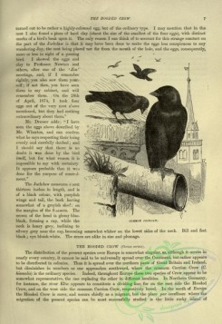 cassells_natural_history-00243 - 006-Common Jackdaw