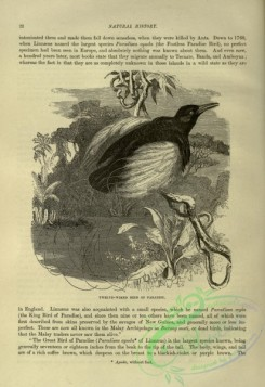 cassells_natural_history-00250 - 013-Twelve-wired Bird of Paradise