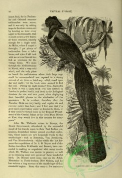 cassells_natural_history-00251 - 014-Gorgeted Bird of Paradise