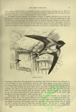 cassells_natural_history-00274 - 037-Common Swallow