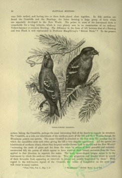 cassells_natural_history-00277 - 040-White-winged Crossbill
