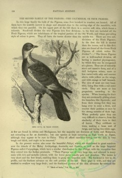 cassells_natural_history-00294 - 057-Ring Dove or Wood Pigeon