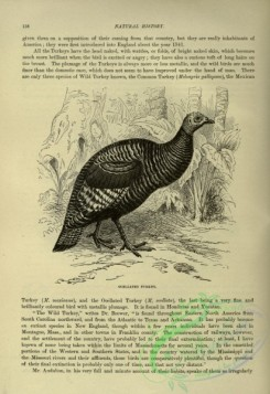 cassells_natural_history-00304 - 067-Ocellated Turkey
