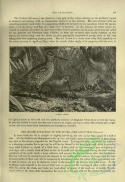 cassells_natural_history-00316 - 079-Common Snipe