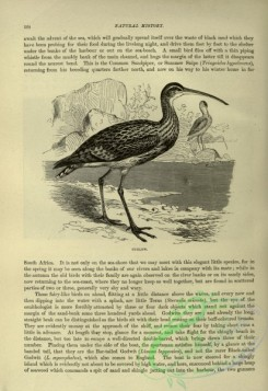 cassells_natural_history-00317 - 080-Curlew