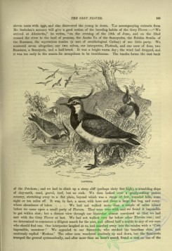 cassells_natural_history-00320 - 083-Lapwing