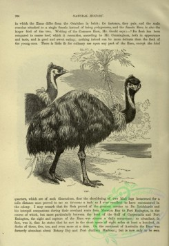 cassells_natural_history-00351 - 114-Emu