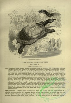 cassells_natural_history-00353 - 117-Soft-shelled Trionyx