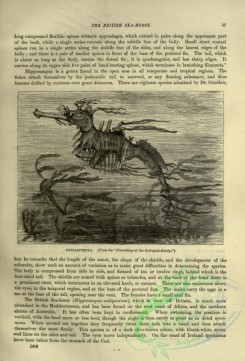 cassells_natural_history-00439 - 020-Phyllopteryx