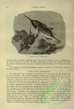 cassells_natural_history-00461 - 042-Trumpet-fish or Bellows-fish