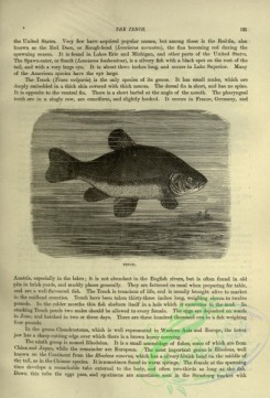 cassells_natural_history-00472 - 053-Tench