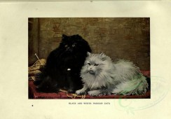 cats-00034 - BLACK AND WHITE PERSIAN CATS [3144x2188]