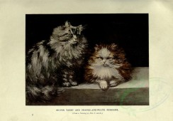 cats-00041 - SILVER TABBY AND ORANGE-AND-WHITE PERSIANS [3144x2188]