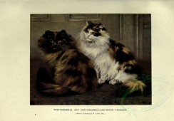cats-00043 - TORTOISESHELL AND TORTOISESHELL-AND-WHITE PERSIANS [3144x2188]