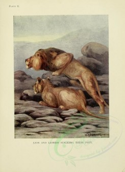 cats-00045 - LION AND LIONESS [2386x3291]
