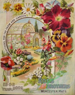 chamomile-00079 - 035-Garden, flowerbed, greenhouse, Petunia, chamomile, Pansies, Poppies, Frame