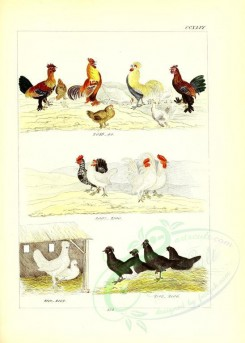 chickens_and_roosters-00010 - unidentified, 006 [2631x3685]