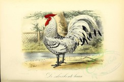 chickens_and_roosters-00040 - Silver-Spangled Rooster [3662x2415]