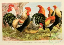 chickens_and_roosters-00110 - 001-White Dorking Cock, Coloured Dorkings, Duck-winged and Black-breasted Red Game