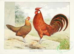 chickens_and_roosters-00134 - Gold Pencilled Hamburghs