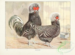 chickens_and_roosters-00138 - Houdans