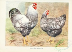 chickens_and_roosters-00146 - Silver Laced Wyandottes
