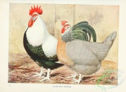 chickens_and_roosters-00147 - Silver-grey Dorkings