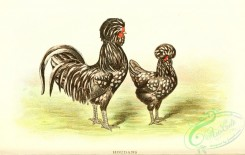 chickens_and_roosters-00160 - 010-Houdans