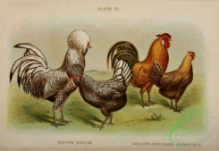 chickens_and_roosters-00172 - 009-Silver Polish, Golden-penciled Hamburgs