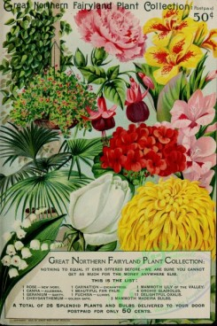 chrysanthemum-00284 - 087-Carnation, Palm, Rose, Canna, geranium, chrysanthemum, Lily, gladiolus , Oxalis