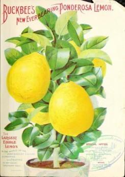 citrus-00644 - 088-Lemon