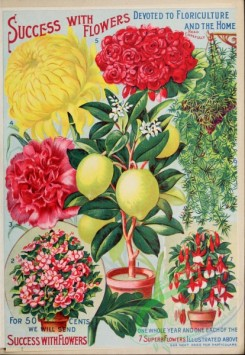citrus-00657 - 040-Chrysanthemum, Rose, Lemon, vases