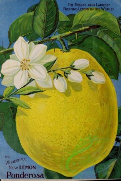 citrus-00658 - 067-Lemon, Flower, Fruit, leaves