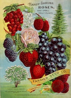 conifer-00137 - 038-Currant, Raspberry, Strawberry, Grapes, Tree, Fir, Rose [2552x3546]