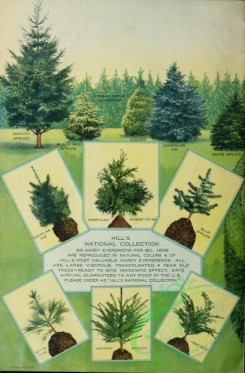 conifer-00141 - 038-Cards, Spruce, Trees, Fir, arbor vitae, Pine [3141x4780]