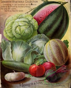 cucumber-00094 - 079-Watermelon, Cabbage, Musk melon, Tomato, Vegetables, Tomato, Beet, Onion, Cucumber