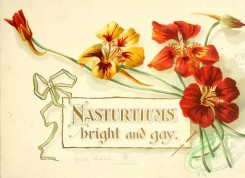 decorations-00017 - 001-Nasturtiums bright and gay