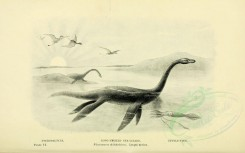 dinosaurs-00026 - PTERODACTYLS, LONG-NECKED SEA-LIZARD, CUTTLE-FISH, Plesiosaurus dolichodeirus [3156x1971]