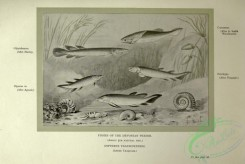 dinosaurs-00134 - black-and-white 006-Fishes of Devonian Period, dipterus valenciennesi, dipterus, glyptoloemus, coccosteus, osteolepis
