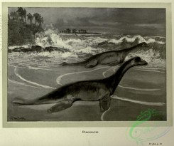 dinosaurs-00144 - black-and-white 016-Plesiosaurus
