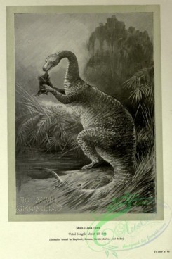 dinosaurs-00149 - black-and-white 021-Megalosaurus
