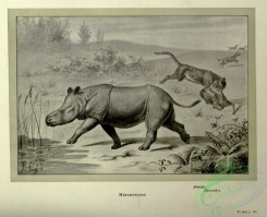 dinosaurs-00176 - black-and-white 048-Metamynodon, dinictis, hyracodon