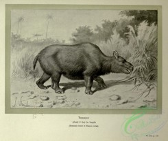 dinosaurs-00181 - black-and-white 053-Toxodon