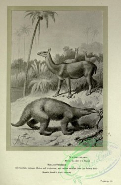dinosaurs-00188 - black-and-white 060-Machrauchenia, Scelidotherium