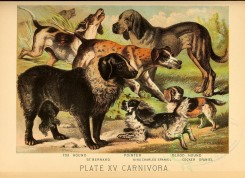 dogs_wolves_foxes-00079 - Fox Hound, St. Bernard, Pointer, King Charles Spaniel, Blood Hound, Cocker Spaniel [3278x2376]