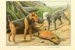dogs_wolves_foxes-00112 - Airedale Terrier, Bedlington Terrier [2770x1862]