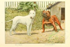 dogs_wolves_foxes-00114 - Bull Terrier, English Bulldog [2770x1862]
