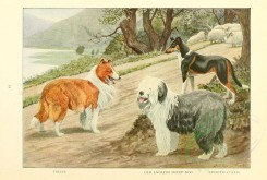 dogs_wolves_foxes-00117 - Collie, Old English Sheep-Dog, Smooth Collie [2770x1862]