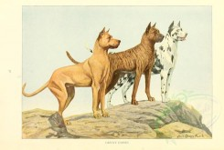dogs_wolves_foxes-00122 - Great Danes [2770x1862]
